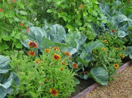 T_Vegetables_and_Companion_Planting